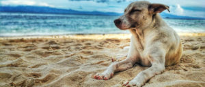 Dog laying on sand at the beach.